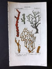 Turpin C1820 Antique Hand Col Sea Life Print. Coral 58